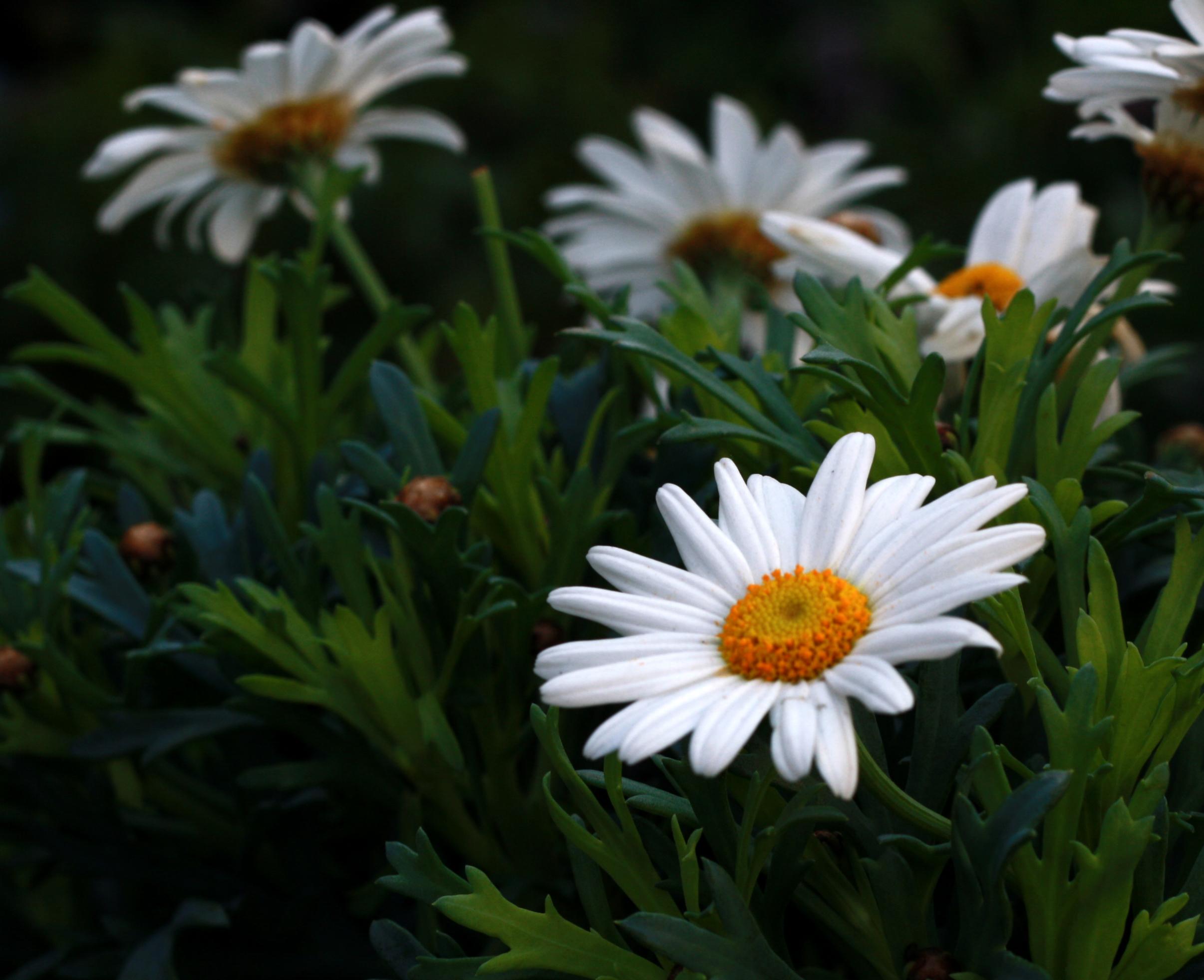 El mercado de las flores columbia road pinceladas de for Arbustos con flores