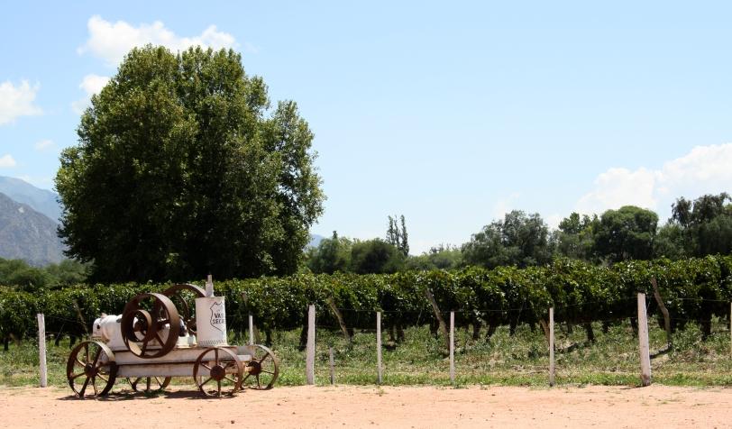 Los viñedos que decoran los alrededores de Cafayate. Foto: Sara Gordón