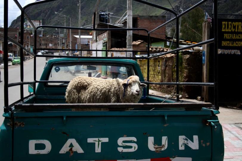Imagen de Huancavelica, Perú, pero era bastante común verlo. Foto: Sara Gordón