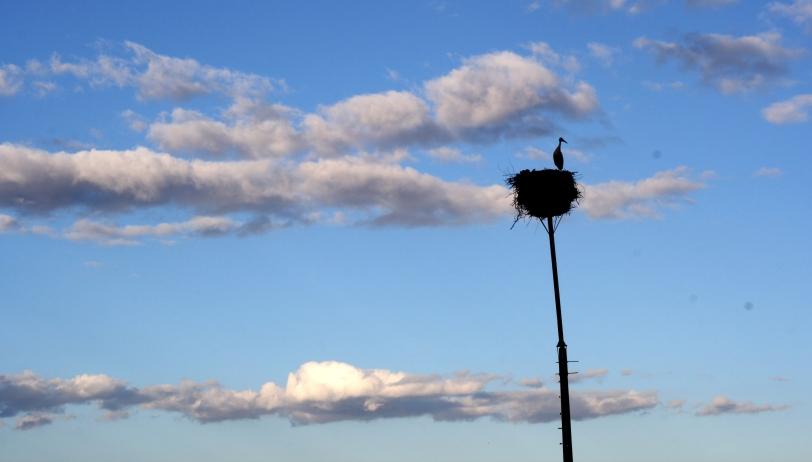 Cigüeña mirando el horizonte. Foto: Sara Gordón
