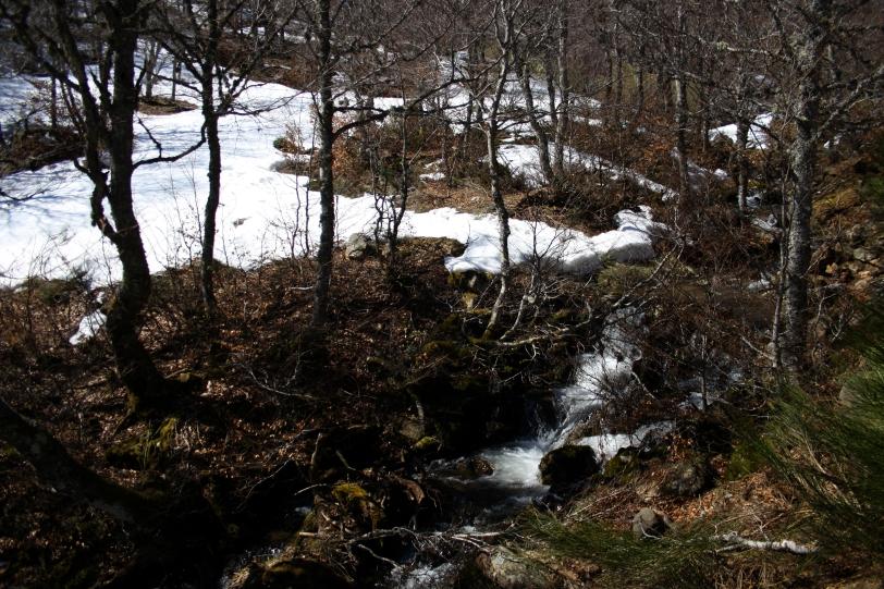 Parte del camino discurre cerca del rio y va introduciéndose en un hayedo. Foto: Sara Gordón