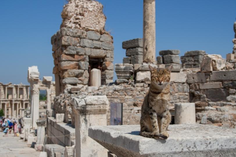 Los gatos son los nuevos moradores fijos de la polis. Foto: Sara Gordón