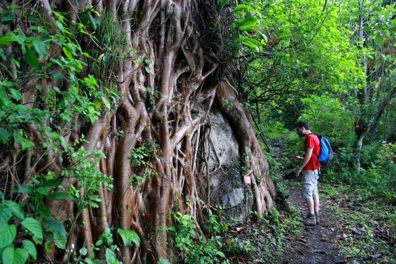 Impresionantes raíces. Foto: Sara Gordón