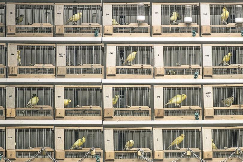 Jaulas en el rastro de Madrid. Foto: Sara Gordón